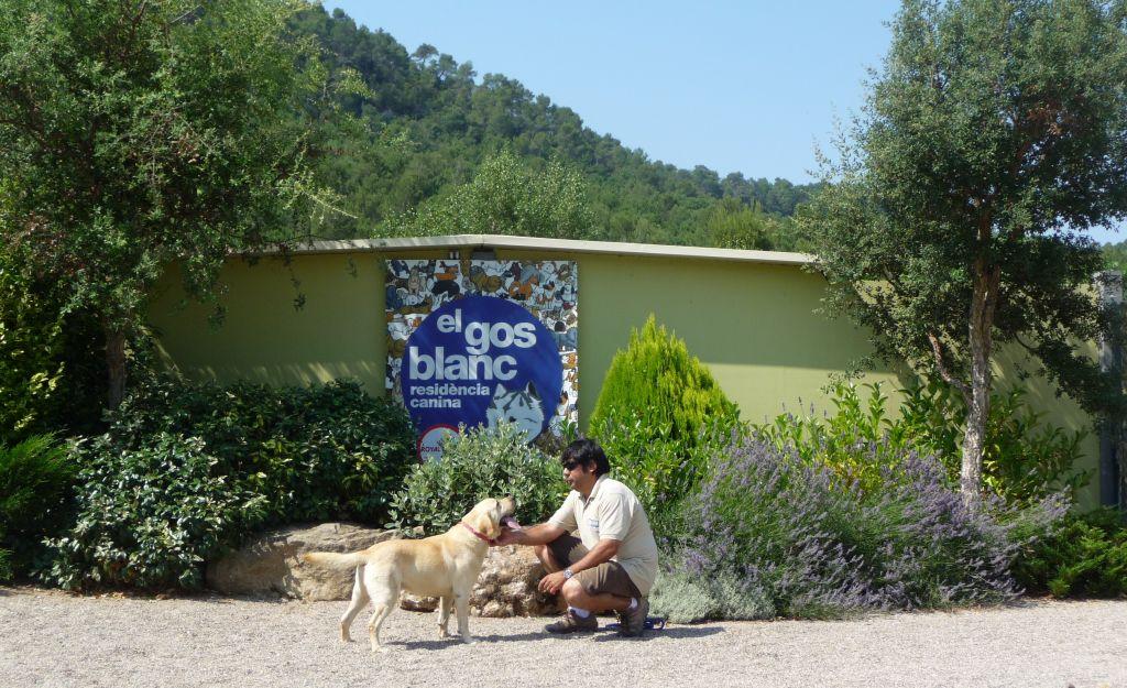 8-El gos blanc residència canina