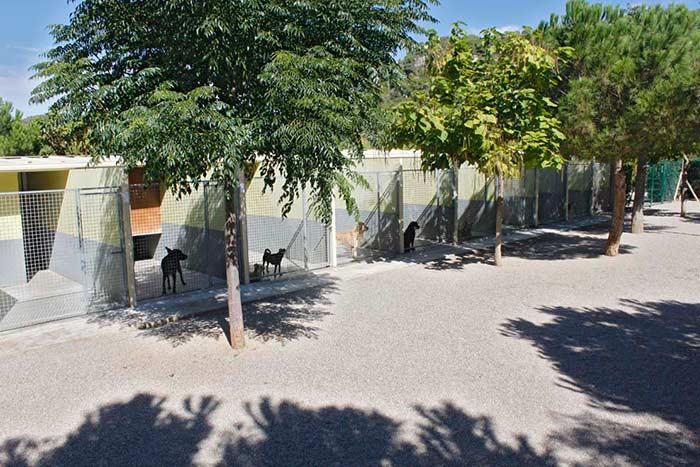 Residencia Canina Barcelona-8