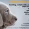 Curso para cachorros- Junio 2015